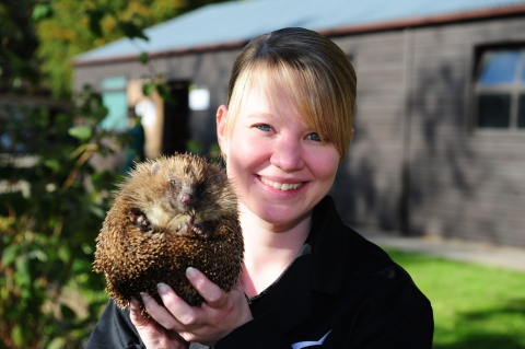 Hedgehog Conservation at Derby College